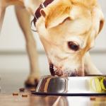 Informationen zur Pflege von Haustieren